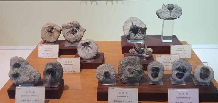 포항 바다화석박물관이 곧 문을 닫아야 할  위기에